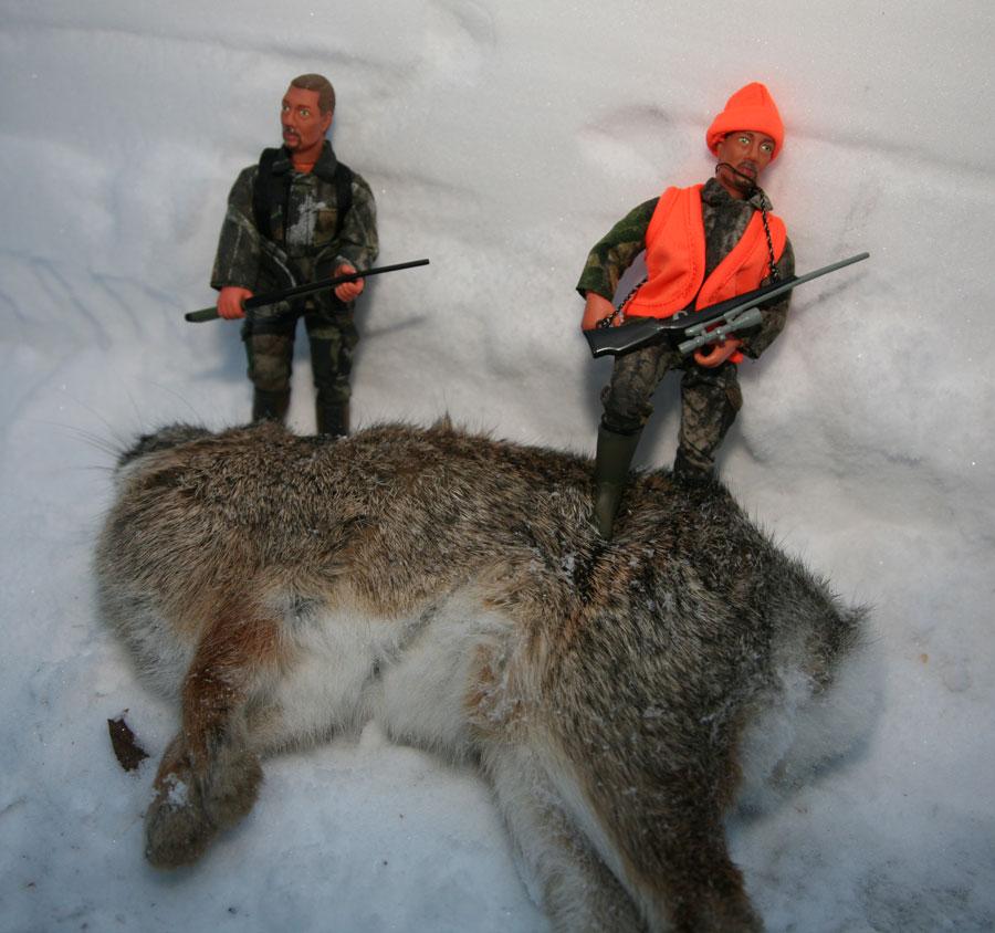 Images Tonyrogers Com Minnesota Giant Buffalo Rabbit Wallpaper