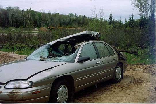 TonyRogers com | Moose -vs- Car, Guess Who Wins?