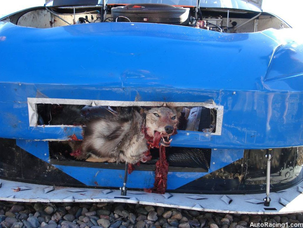 What Happens When You Hit A Coyote At 200mph Wtf