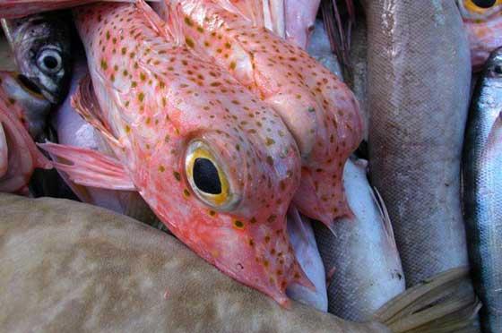 Weird fish indonesia indian ocean fish for Weird looking fish