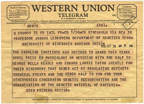 Below a 1958 telegram to professor joshua lederberg about a nobel